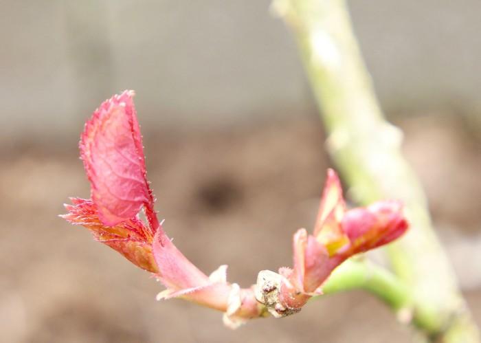 Forårstegn i haven